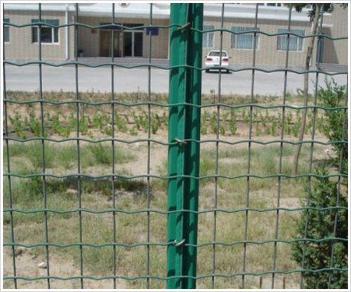 圈地铁丝网哪里有卖 养殖绿色铁丝网报价 安平县石誉丝网制造有限公司