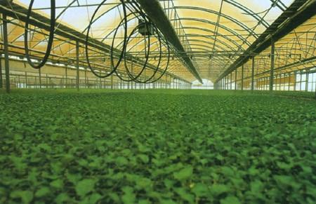 大棚滴灌设备 果树水肥一体化设备价格 莱芜市莱城区宏苗滴灌喷灌制品厂