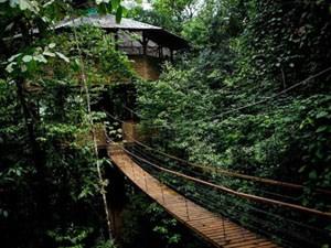 树上丛林穿越安装_景区其他游艺设施安装